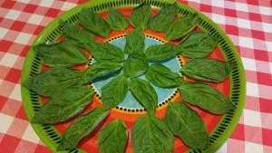 Ladybug - leaves
